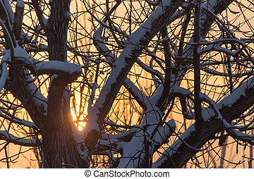 bare branches of a tree in the sun dawn