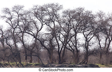 bare branches of a tree