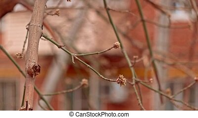 Bare branches of tree shivering on wind in early spring in ...