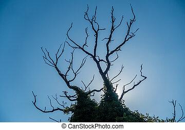 Bare Branches Silhouette 2
