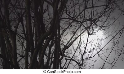 Bare branches detail with fog at night