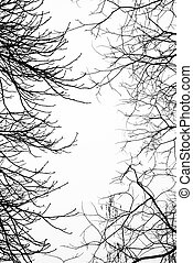 Bare leafless tree branches with white sky in the background