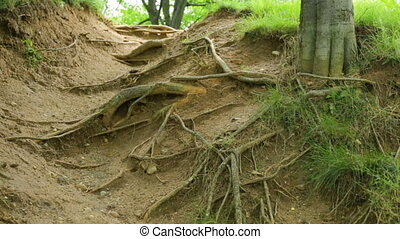 Bare roots of tree