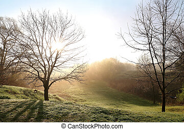 Bare Spring Oak Trees on A Foggy Morning Sunrise
