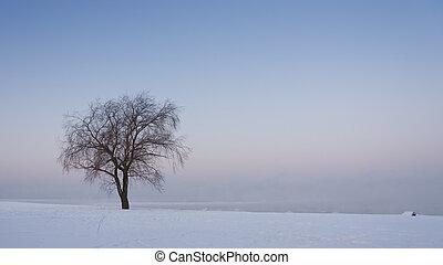 Bare tree at snowy field