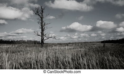Bare tree  - Bare tree,mystic timelapse
