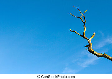Bare tree branch against a blue sky