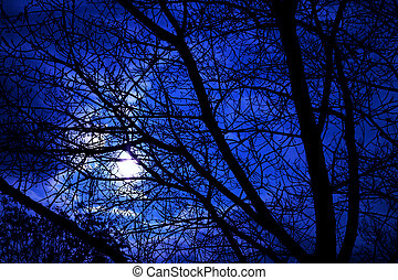 Bare tree branch silhouettes in twilight