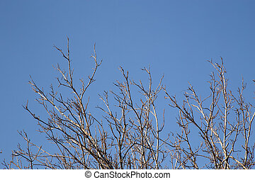 bare tree branches against the sky