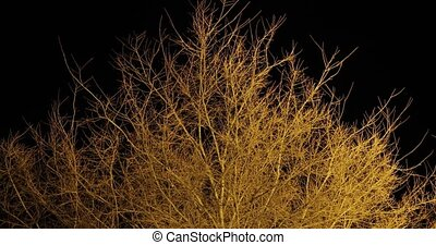 Bare trees branches in the dark moving in the light of a street lamp