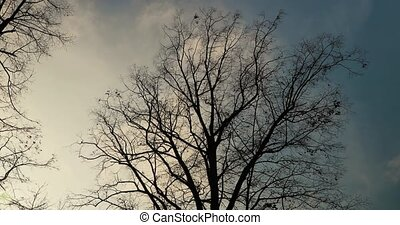 Bare trees branches moving in the wind in a park