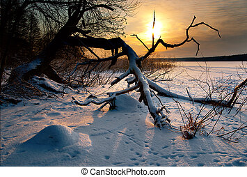 Bare tree by lake in winter - Bare tree by lake at sunset in...
