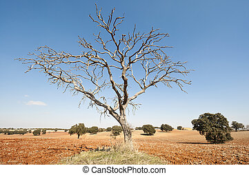Bare tree in an agricultural landscape. Photo taken in Brea ...