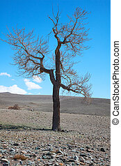 bare tree in desert landscape