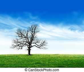 Bare tree in field stock photo