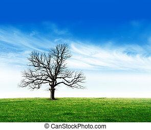 Bare tree in field stock photo