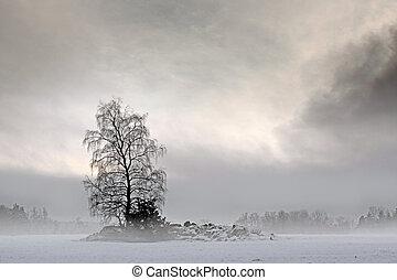 Bare tree in foggy landscape