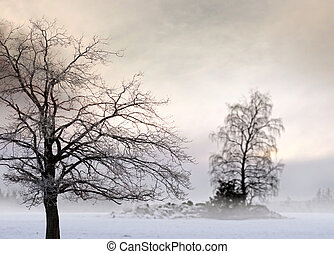 Bare tree in foggy landscape
