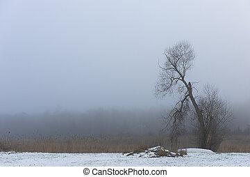 bare tree in foggy winter landscape