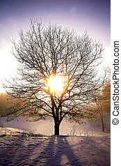 Bare Tree in Front of Sun on a Bright Winter Sunrise