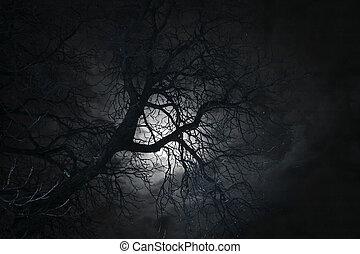 bare tree in moonlight