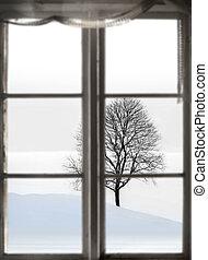 bare tree in sparse winter landscape