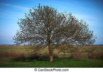 bare tree in spring