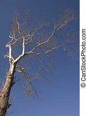 Bare Tree in Winter