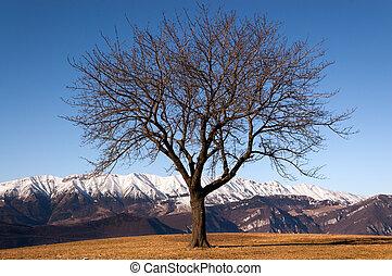 Bare Tree in Winter - Italian Alps