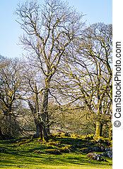 Bare tree in winter landscape in England