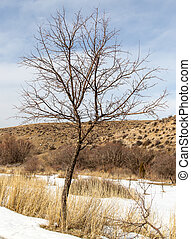 bare tree in winter on nature
