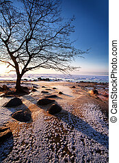 Bare tree in winter on the beach by the sea