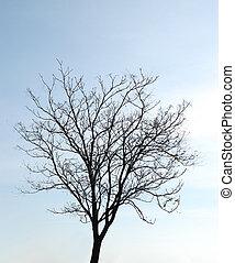 Bare tree on blue sky background
