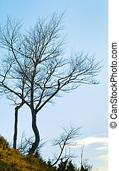 bare tree on sky background