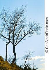 bare tree on sky background
