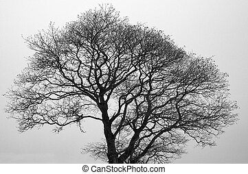Bare Tree - A black-and-white image of a bare tree against a...