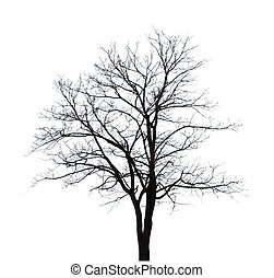 Bare tree shape isolated on white background.