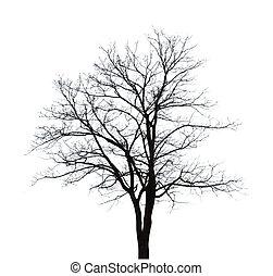 Bare tree shape isolated on white background.
