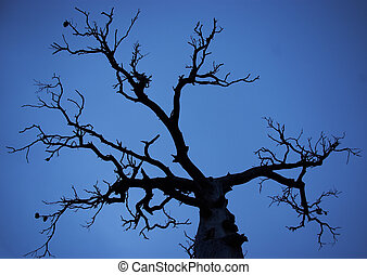 bare tree silhouette on blue sky background