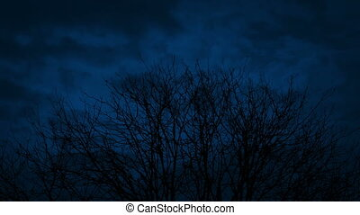 Bare Tree Top At Night With Passing Clouds - Bare tree tops...