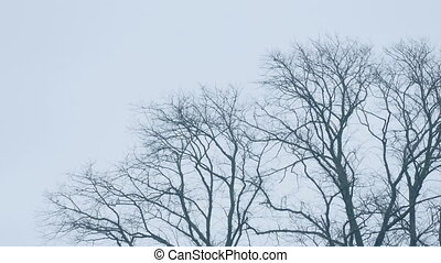 Bare Tree Tops In Wind - Bare tree tops in winter sway in...