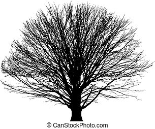 bare tree vector background