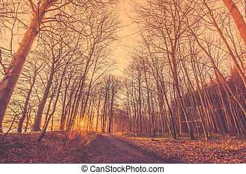 Bare trees by a forest trail