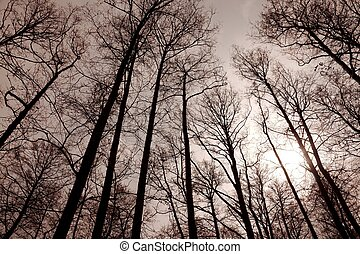 Bare trees forest