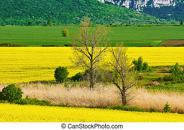 Bare Trees in the Field