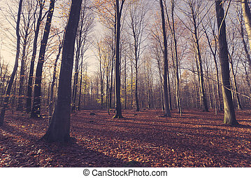 Bare trees in the forest