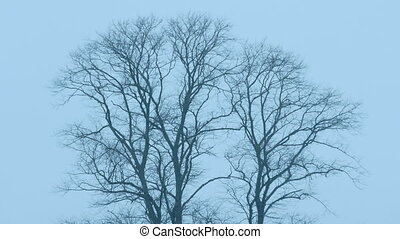 Bare Trees In The Wind At Dusk - Bare trees on cold winter...