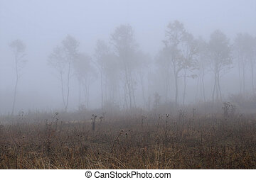 Bare Trees in Thick Fog