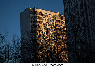 bare trees in winter on the background of a multi-storey building