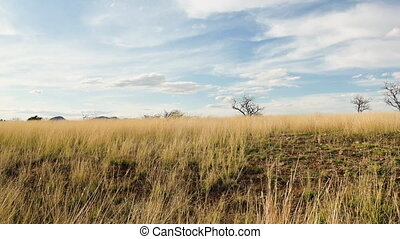 Bare trees on a field in Arizona landscape - Panning shot ...